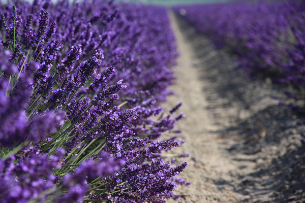 Royal Blue CB3 large